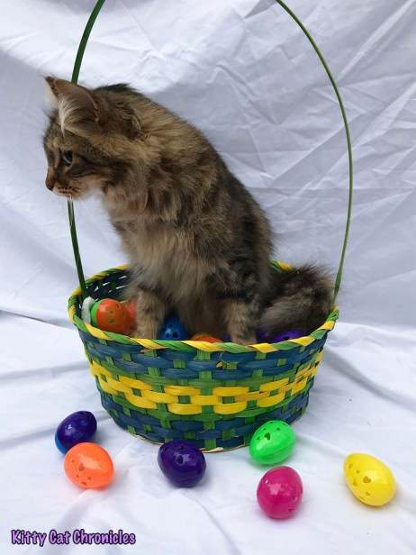 The 6th Annual KCC Easter Egg Hunt - Caster, defending champion