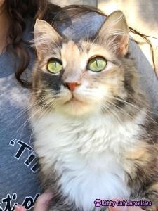 Sophie - CH Cat, cerebellar hypoplasia