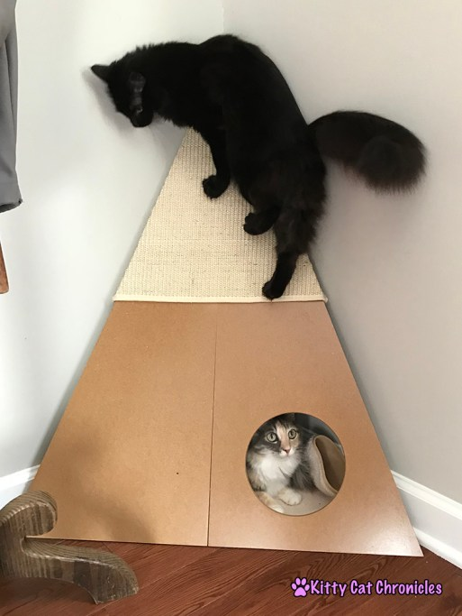 Creating a Stimulating Environment for Your Indoor Adventure Cat with Pioneer Pet - Bootsie's Corner Scratcher