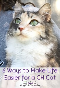 6 Ways to Make Life Easier for a CH Cat - cat with cerebellar hypoplasia