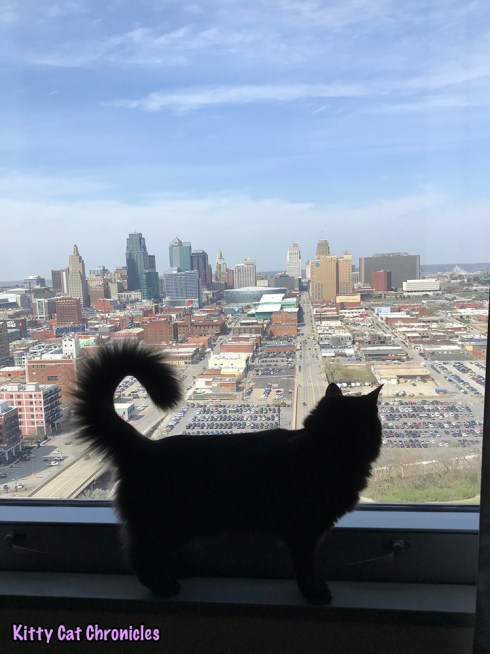 BlogPaws 2018 Recap with Kylo Ren