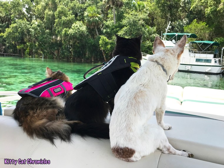 The KCC Adventure Team Tours the St. John's River & Silver Glen Springs - cats on a boat a Silver Glen Springs