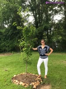 Remembering Milton - Milton's dogwood tree
