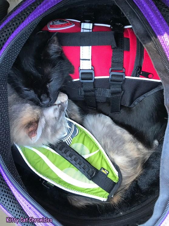 The KCC Adventure Team Canoes Lake Juliette - cats in Sleepypod