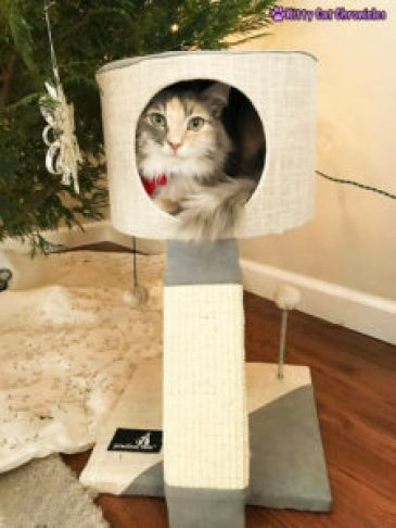 The 2018 KCC Holiday Gift Guide for Adventure Cats - Practical Cats Minimalist Cat Condo