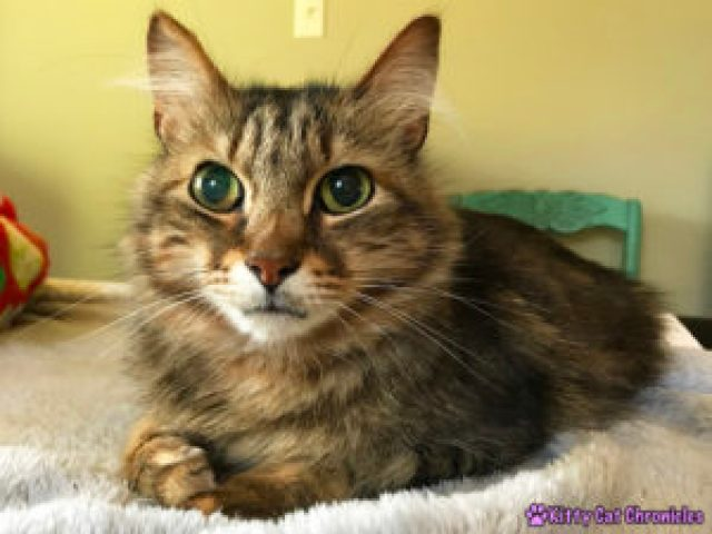 """An Update with Caster """"Mudge"""" - Caster is well again!"""