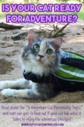 Is Your Cat Ready for Adventure?