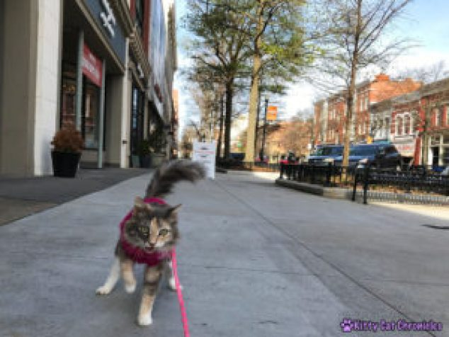 A Downtown Adventure with Sophie