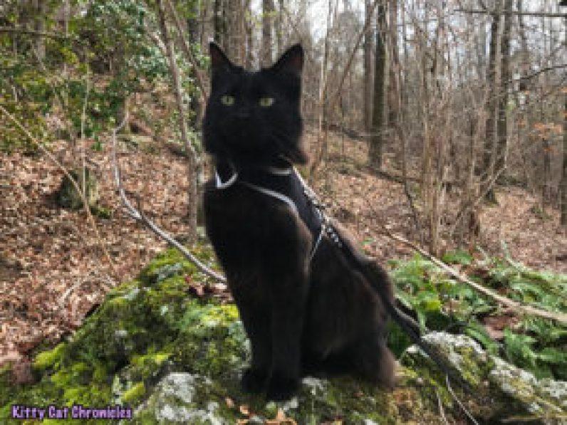Kylo Ren's Birthday Hike at Brown's Mount - hiking cat