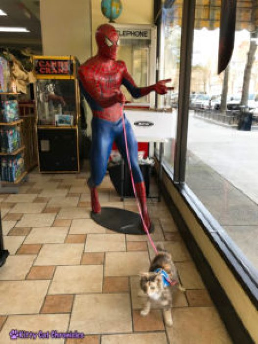 Comic Books, Kitties, and Spider-Man: A Downtown Adventure with Sophie - Comics Plus of Macon