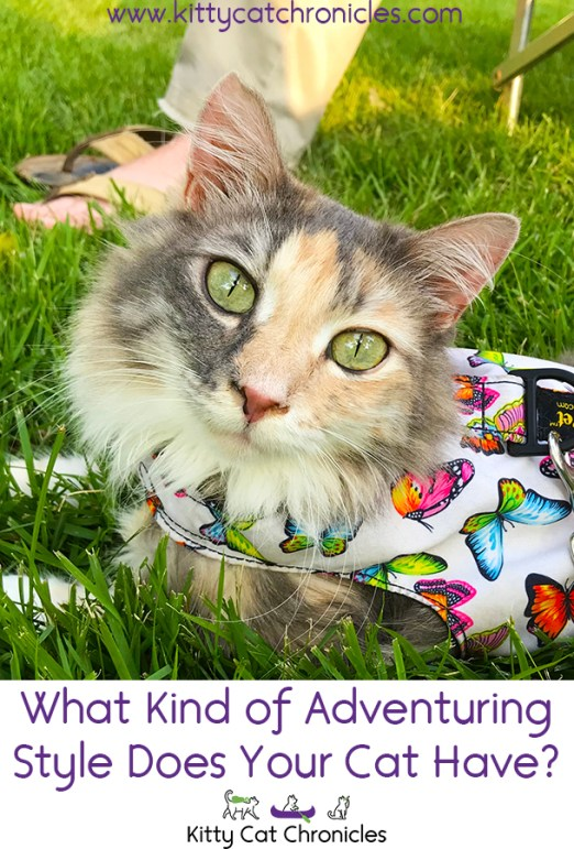 What Kind of Adventuring Style Does Your Cat Have?