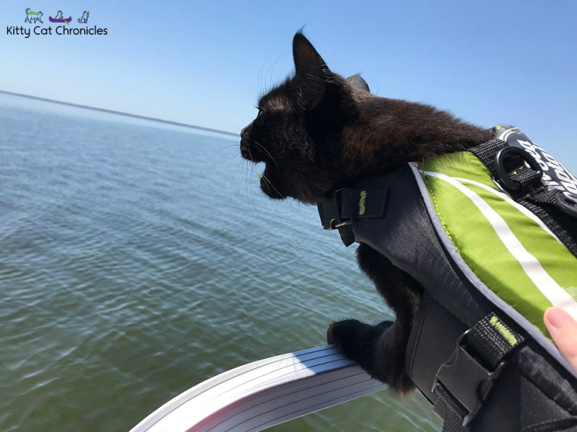 Kylo Ren and the 3-Hour Boat Tour - cat on a boat roaring