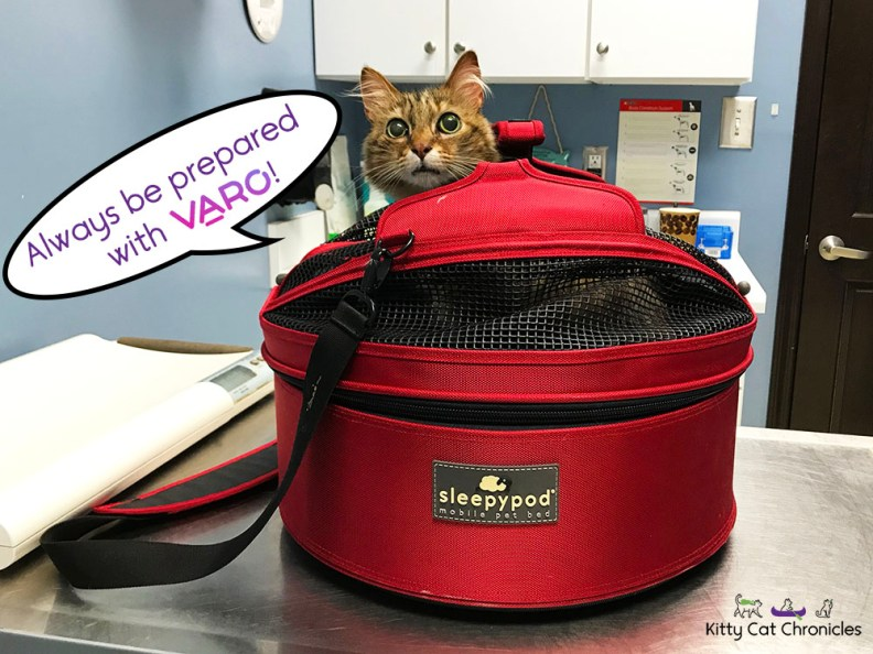 Be Prepared for Pet Emergencies: Save with Varo! - cat in carrier at vet