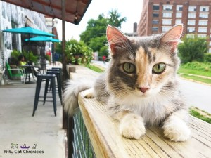 Exploring Atlanta with Sophie - cat on Atlanta BeltLine