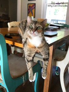 cat hanging on table