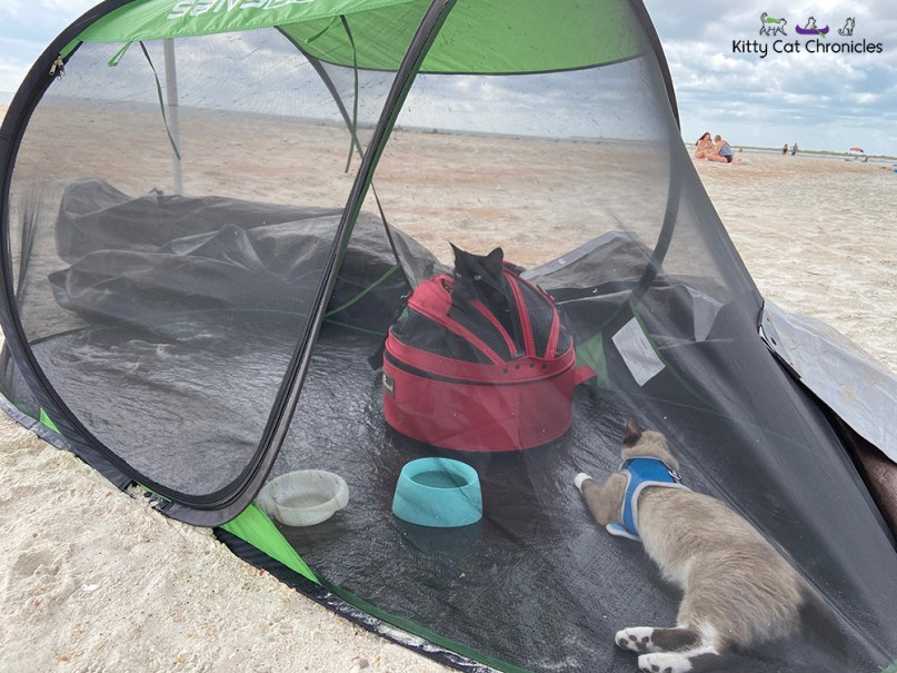 cats in a tent on the beach