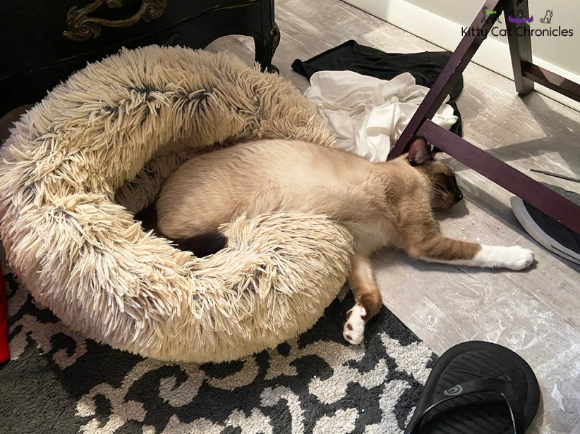 gryphon cat worn out on cat bed