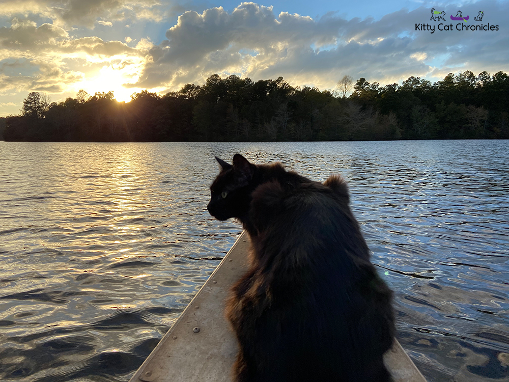 cat on a sunset canoe ride on Lake Meriwether