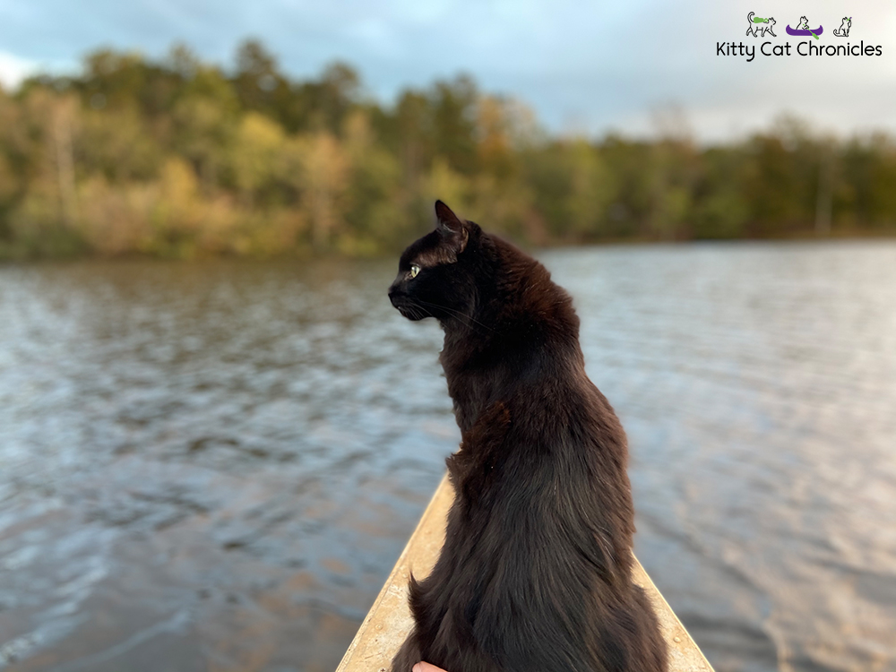 Black cat on a canoe at Lake Meriwether