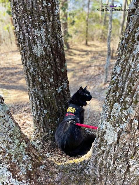 black cat sitting on a tree base