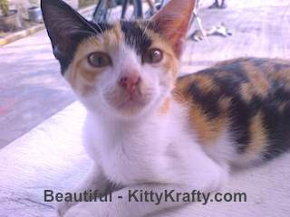 Beautiful kucing Ichsan