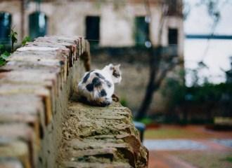 bagaimana kucing bisa selamat saat terjatuh
