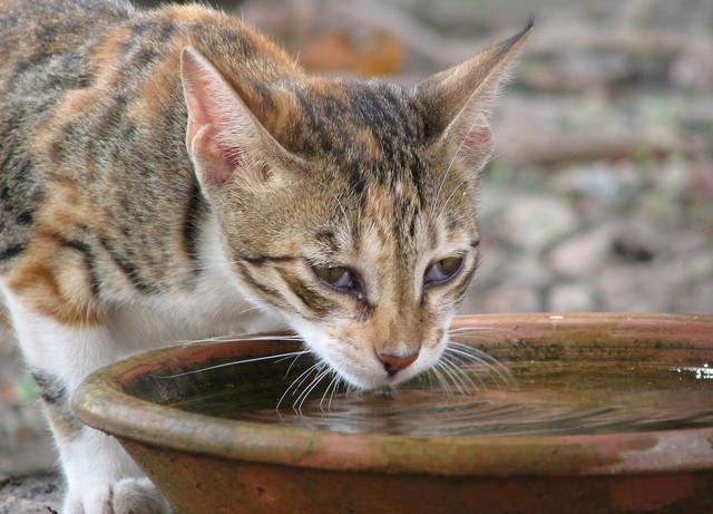 kucing minum