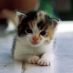 benda berbahaya untuk kucing