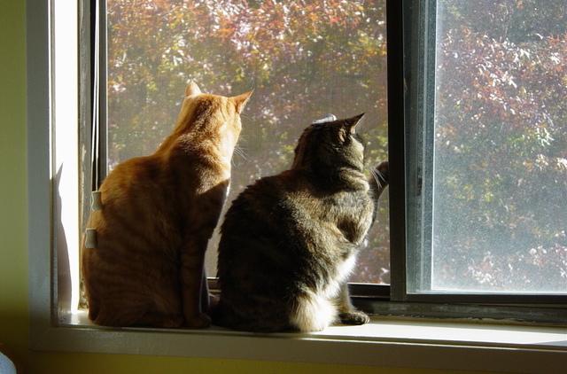 Perilaku Seksual Kucing Kittykrafty