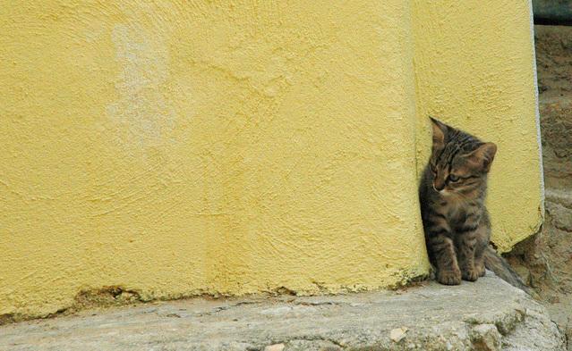 Sterilisasi Kucing Gratis
