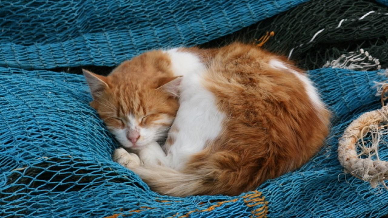 Memberi Makan Kucing Yang Sakit Kittykrafty Com