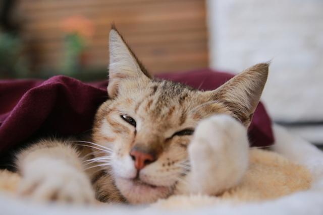 Tanda-tanda Kucing yang Sakit
