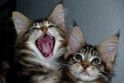 Cara kucing berkomunikasi