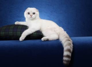 Starlas Cats