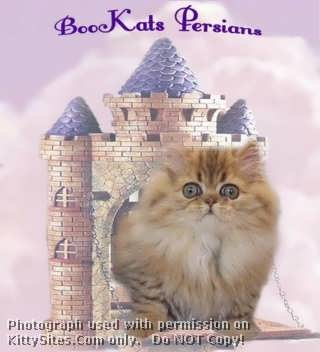 BooKats Cattery