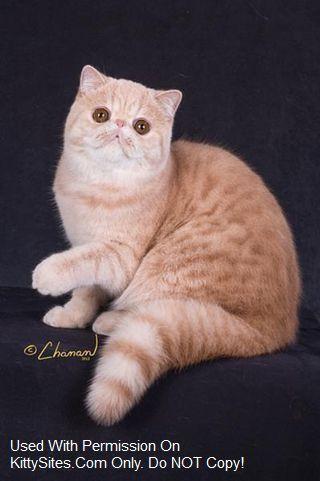 cat petting chart