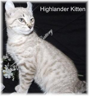 Forever Kittens Cattery