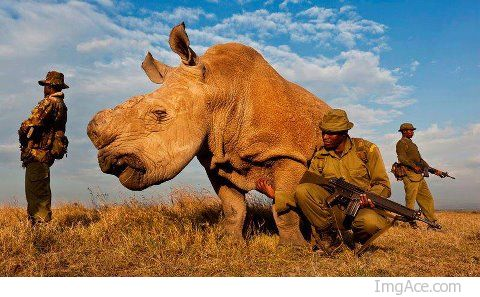 Guardians of one of the last white Rhinos