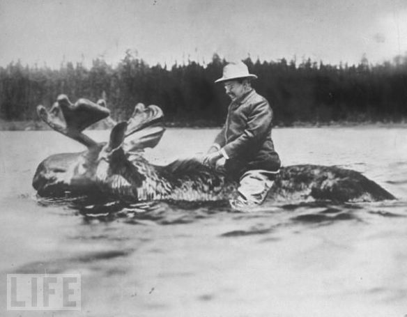 vintage Life magazine, Teddy Roosevelt Riding the Presidential Moose