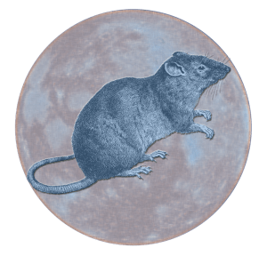 Celestial Rat | China Rose