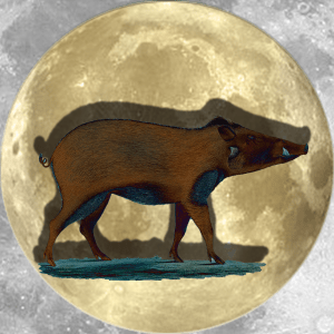 Lucky Moon Boar | China Rose