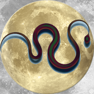 Lucky Moon Snake   China Rose