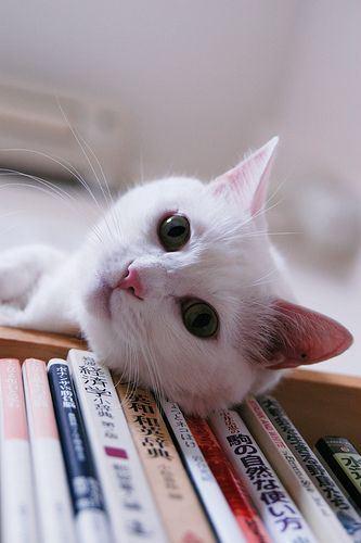 Funny Kitty Pics