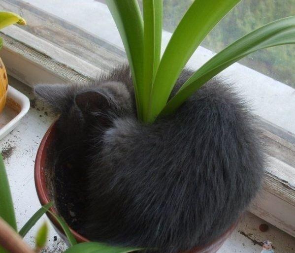 PlantWarmerKitt