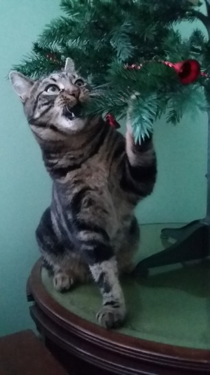 Gizmo chewing the tree