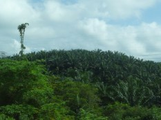 Jungles on the bus ride from KL to Penang