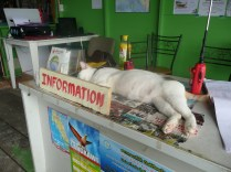 We are greeted at our immigration stop by a lounging kitty.