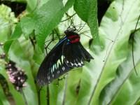 Butterfly Park, KL