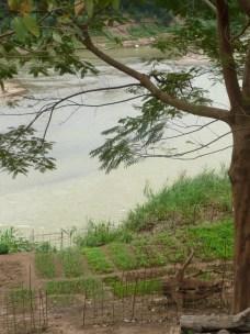 Riverside gardening