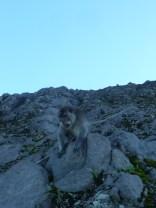 Monkey companion